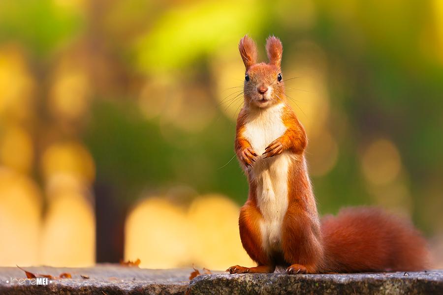 超可爱动物摄影作品欣赏-zol数码