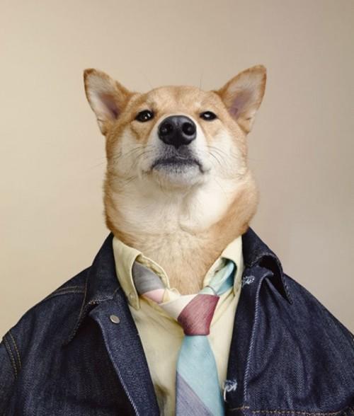 时尚狗狗的穿衣指南 搞笑创意摄影图赏-中关村在线