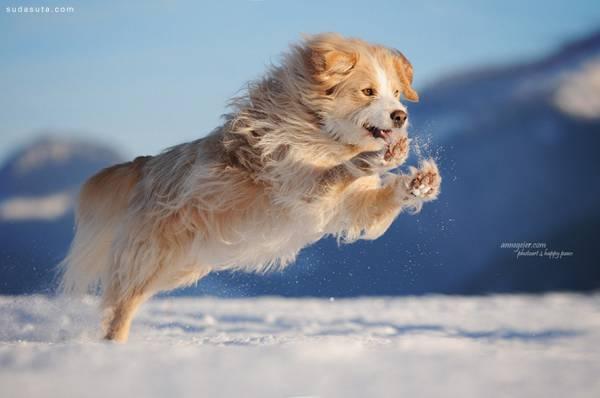 动物摄影:超级可爱小萌狗狗; 超级可爱小萌狗狗_设友公社 - 电脑上wap