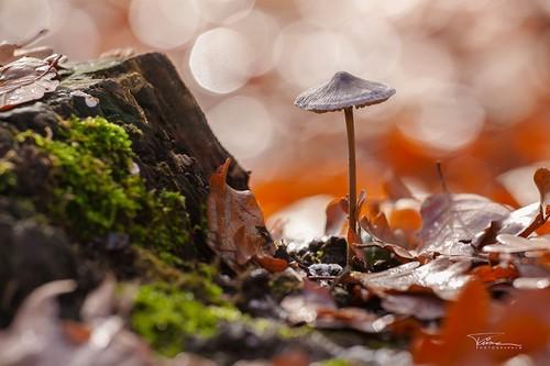 清新逆光可爱蘑菇 国外摄影师作品精选2