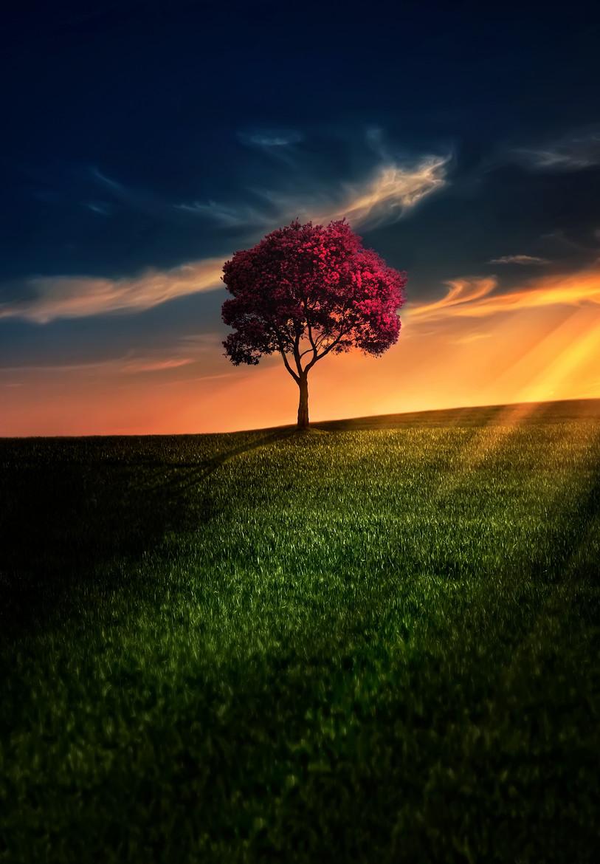 将一棵树作为主角 唯美风格风景摄影佳作