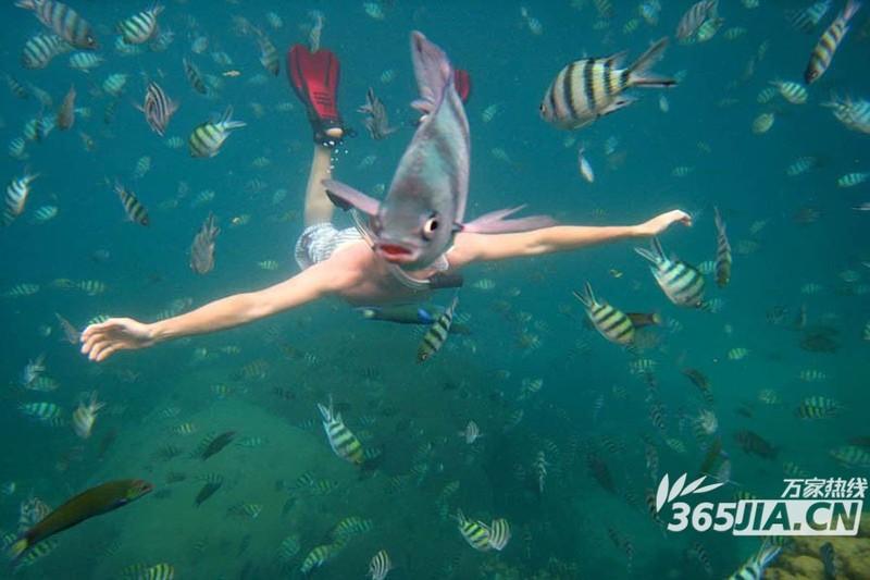 壁纸 动物 海底 海底世界 海洋馆 水族馆 鱼 鱼类 800_533