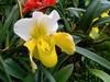 带你欣赏绝美的兰花世界