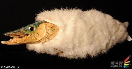 英国拍卖传说中的动物的标本