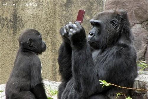 旧金山动物园大猩猩玩转dsi xl