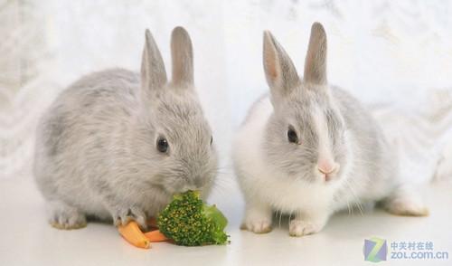 可爱的小兔子一直都是人最喜欢的动物之一