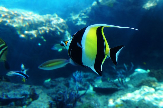 壁纸 动物 海底 海底世界 海洋馆 水族馆 鱼 鱼类 桌面 550_366
