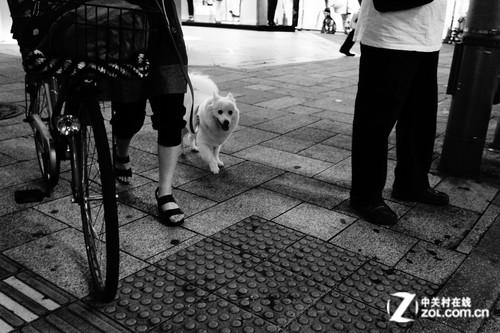 日本/白狗...