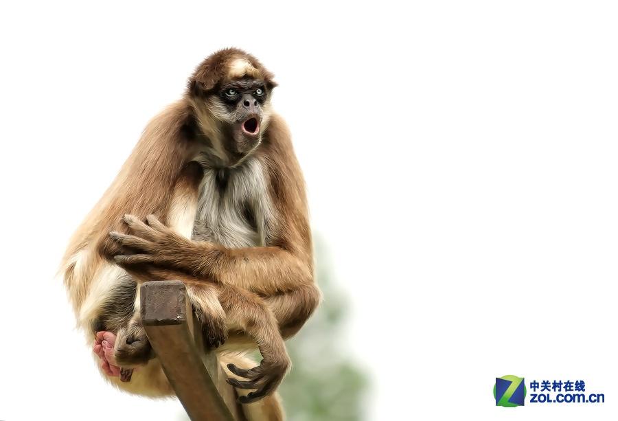 女摄影师与野生动物们的故事-zol