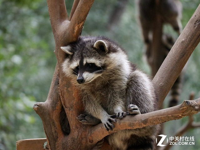 小微单也能拍 野生动物园摄影全攻略