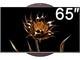 海信65C1